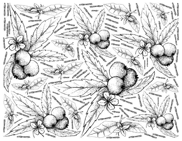 Illustration de fruits de muntingia calabura dessinés à la main