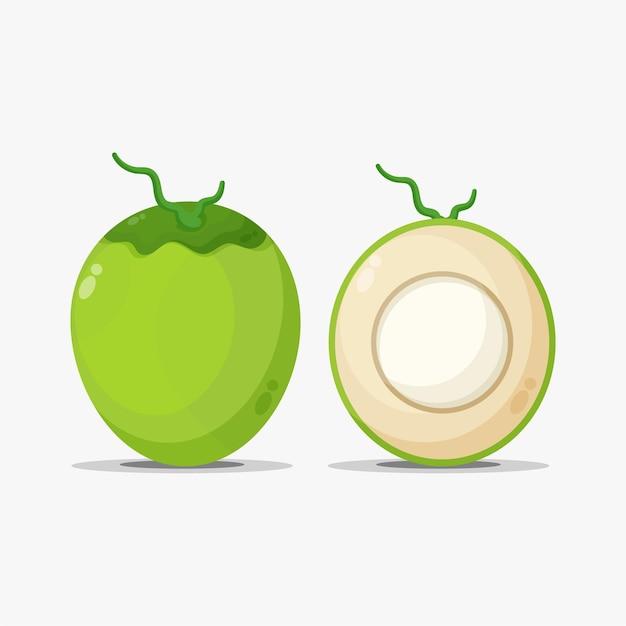 Illustration de fruits de noix de coco verte