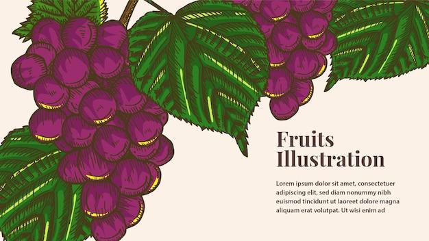 Illustration de fruits