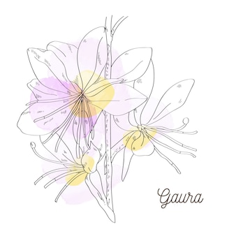 Illustration de gaura belle rose sur fond blanc