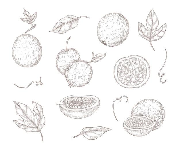 Illustration gravée de fruits de la passion frais