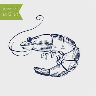 Illustration de gravure animale crevette mer caridea