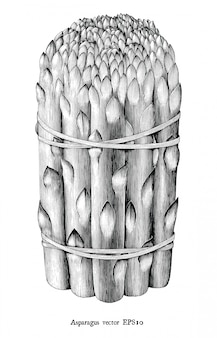 Illustration de gravure antique d'asperges clipart noir et blanc isolé