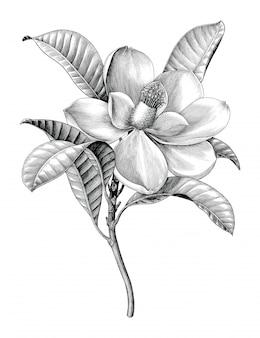 Illustration de gravure antique de clipart botanique noir et blanc de brindille de fleur de magnolia isolé