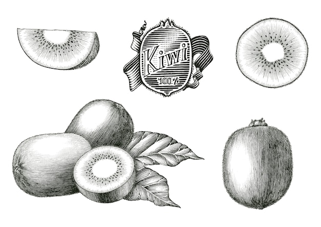Illustration de gravure antique de la main de la collection de fruits kiwi dessiner des clipart noir et blanc de style vintage isolé