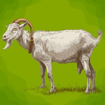 Illustration de gravure de chèvre