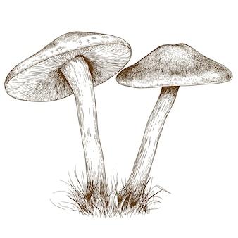 Illustration de gravure de deux champignons