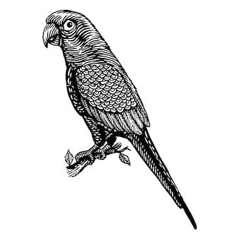 Illustration de gravure oiseau perroquet