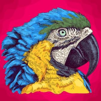 Illustration de gravure de la tête de macaw