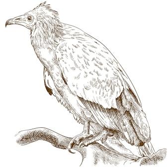 Illustration de gravure de vautour égyptien