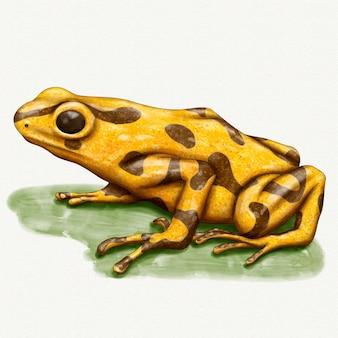 Illustration de grenouille aquarelle peinte à la main