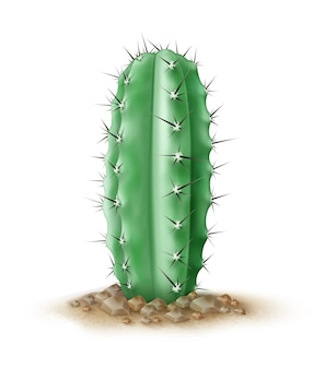 Illustration de gros plan cactus bleu