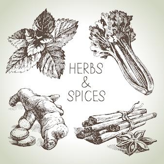 Illustration d'herbes et d'épices de cuisine