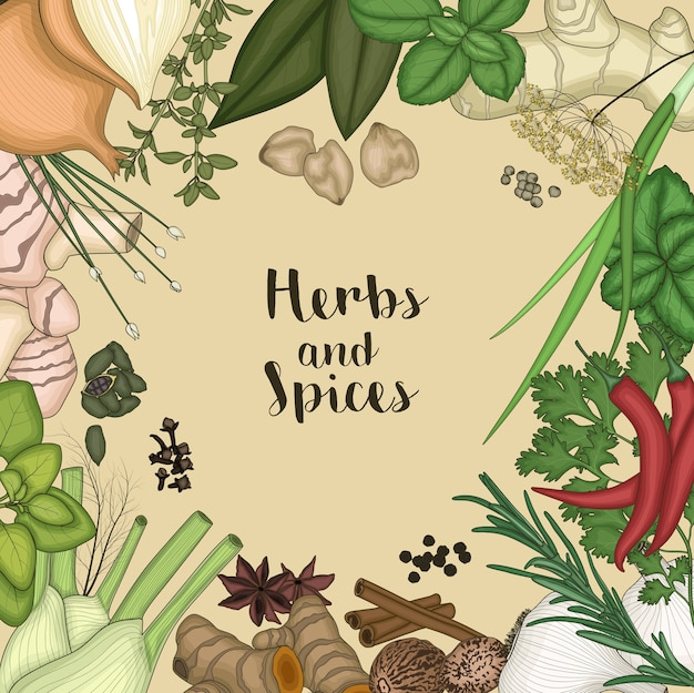 Illustration des herbes et des épices