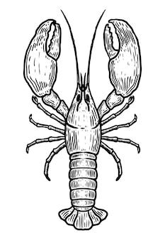 Illustration de homard dessiné à la main sur blanc