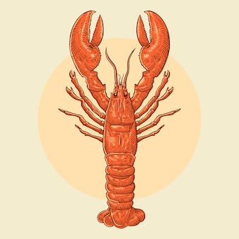 Illustration de homard dessiné main