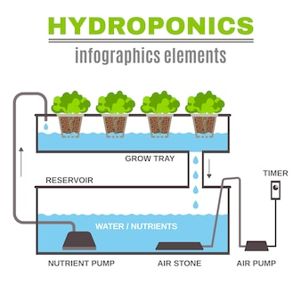 Illustration hydroponique infographique