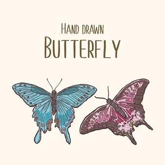 Illustration d'insecte coloré avec papillon dessiné à la main