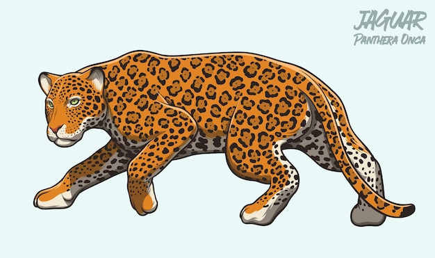 Illustration de jaguar qui se cache