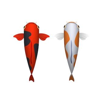 Illustration de jeu aquatique de carpe arc-en-ciel oriental