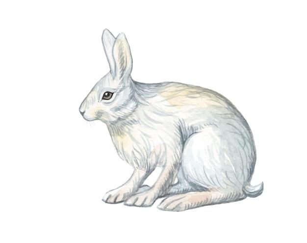 Illustration de lapin mignon peint à la main aquarelle