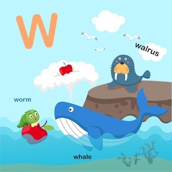 Illustration lettre alphabet isolé w