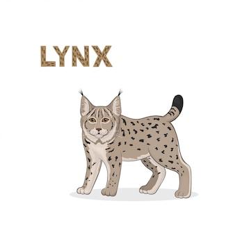 Illustration, un lynx de bande dessinée,
