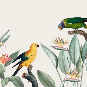 Illustration de macaw tropical