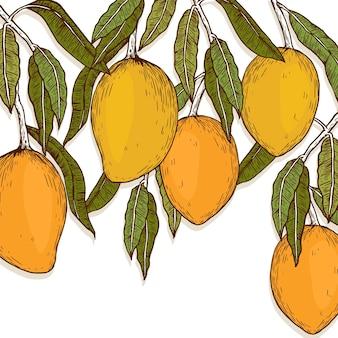 Illustration de manguier botanique