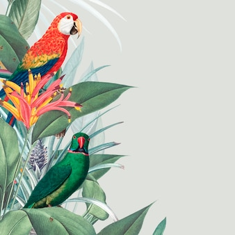 Illustration de maquette tropicale macaw
