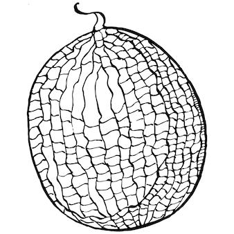 Illustration de melon croquis dessinés à la main isolé sur fond blanc ferme décorative de style rétro
