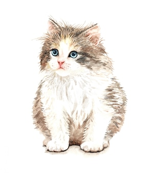 Illustration mignonne de chat aquarelle. t-shirt imprimé.