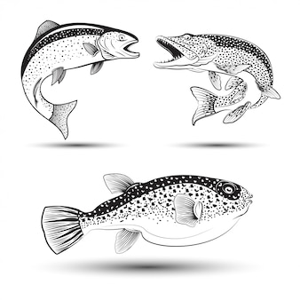 Illustration monochrome de brochet, truite et fugu, ensemble de poissons,