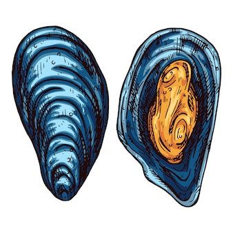 Illustration de moules dessinés à la main