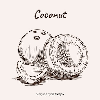 Illustration de noix de coco dessinés à la main