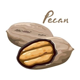 Illustration d'une noix de pécan entière pelée, coupée en deux.