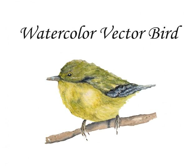Illustration d'oiseau aquarelle vecteur