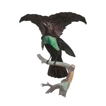 Illustration d'oiseau vintage