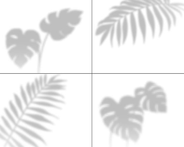 Illustration des ombres végétales