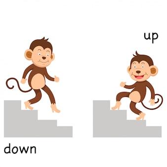 Illustration opposée de haut en bas