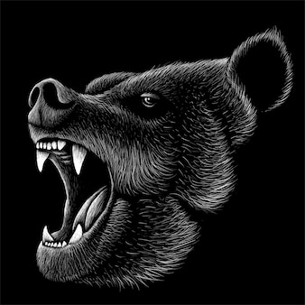 Illustration d'ours dessiné à la main