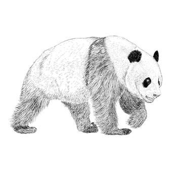 Illustration de panda, dessin dessiné à la main