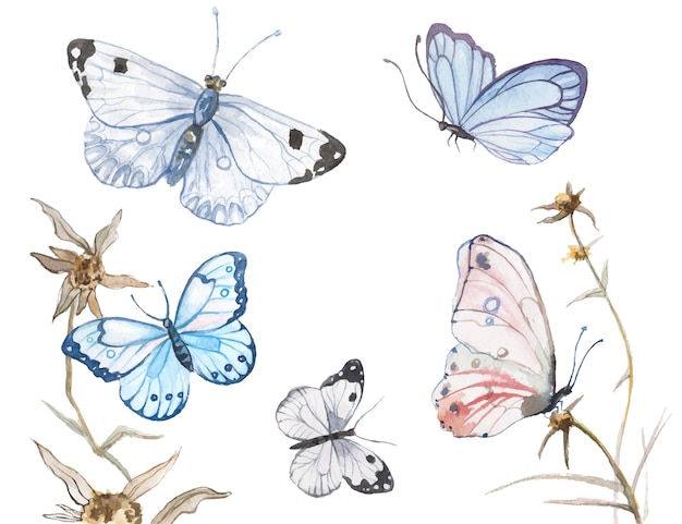 Illustration de papillons aquarelle