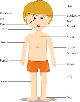 Illustration d'une partie du corps