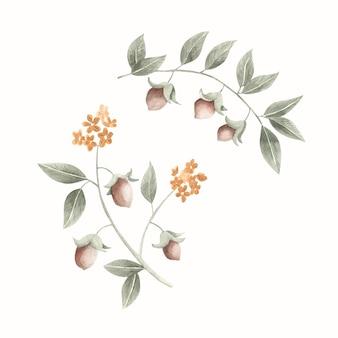 Illustration de plante aquarelle jojoba