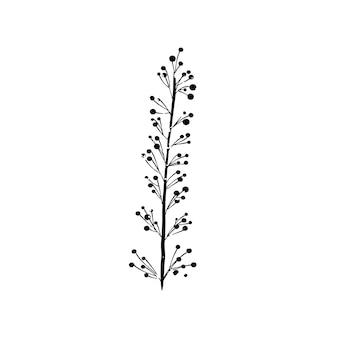 Illustration de la plante
