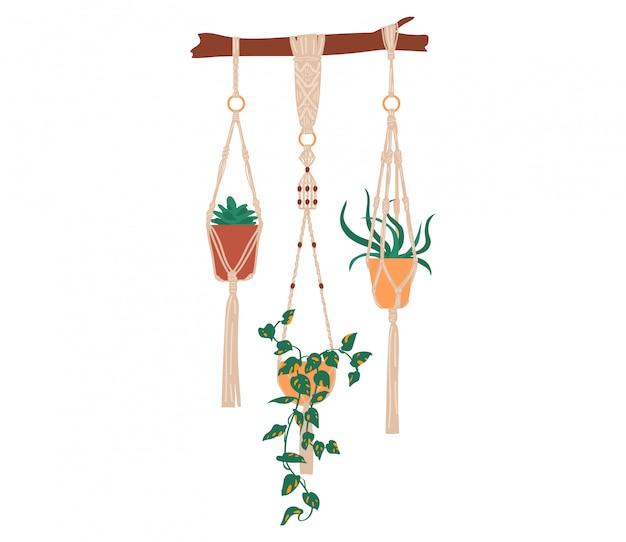 Illustration de plantes d'intérieur, plantes vertes succulentes de dessin animé vert tropical en pot, intérieur de décor dessiné à la main sur blanc