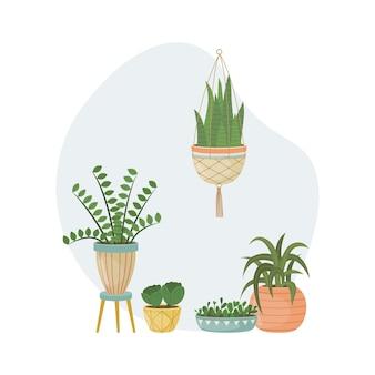 L'illustration plate avec des pantalons de maison dans des pots. plantation. plantes décoratives à l'intérieur de la maison. style plat.