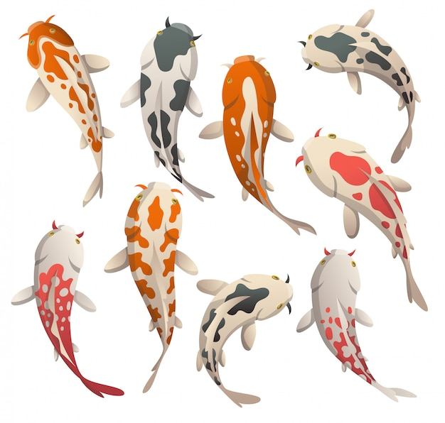 Illustration plate de poisson koi, carpe japonaise et koi oriental coloré. ensemble de poisson rouge chinois, pêche traditionnelle isolée