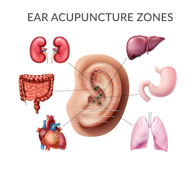 Illustration des points d'acupuncture sur l'oreille